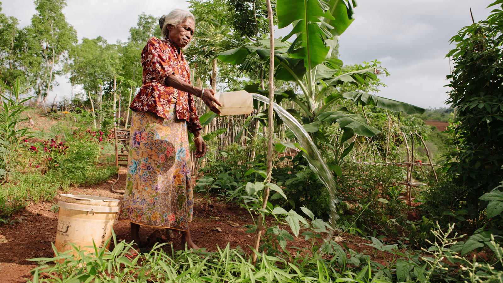 Alzira, 60, WaterAid beneficiary waters her garden, Lulibaba, Laclolema, Suco Dato, Liquica district, Timor Leste, 2013