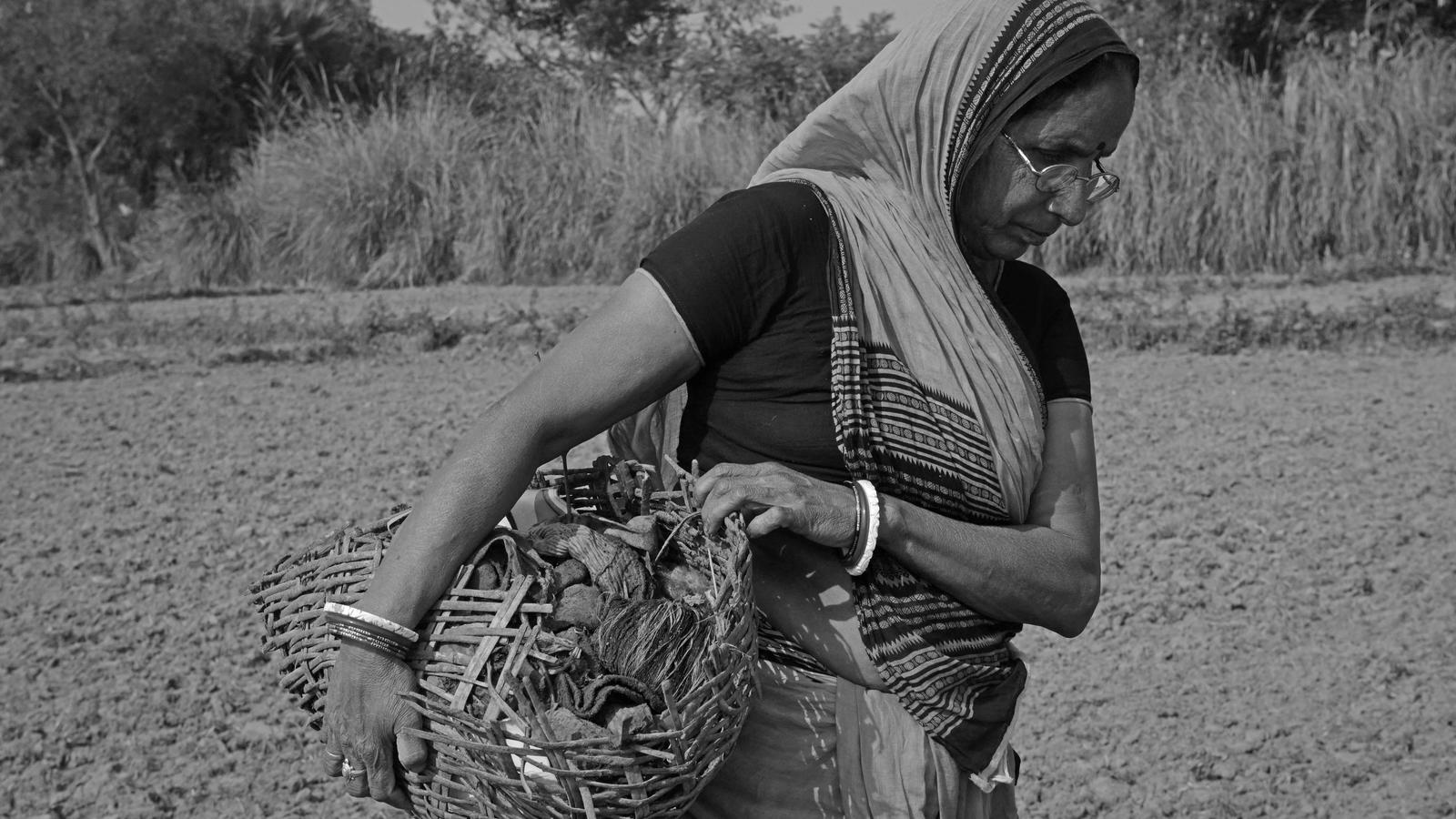 Meenadevi carrying dried waste and human excreta in a partially broken bamboo basket to a manure pit in a field 4km away