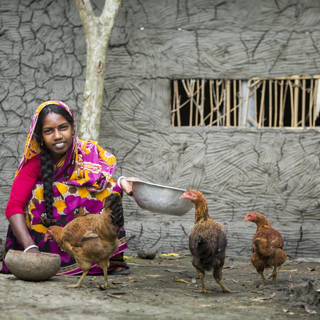 A girl crouching to feed chickens in rural Bangladesh